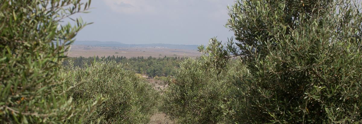 erezharodi-1038