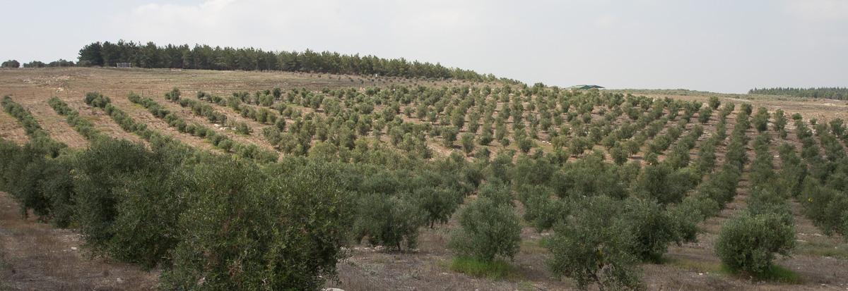 erezharodi-1039